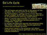 eel life cycle as understood by a physical ocean modeler