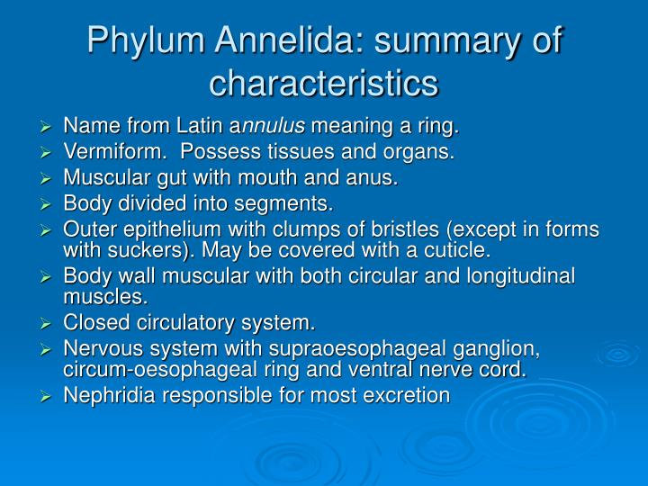 Phylum annelida: summary of characteristics ppt download.