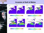invasion of gulf of maine