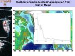 washout of a non developing population from gulf of maine