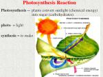 photosynthesis reaction