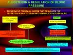 aldosteron regulation of blood pressure