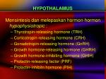 hypothalamus1