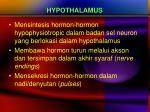 hypothalamus2