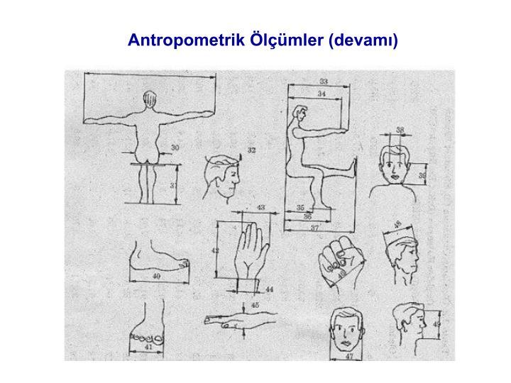 Antropometrik Ölçümler (devamı)