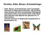 termiten k fer bienen schmetterlinge
