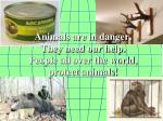 animals are in danger they need our help people all over the world protect animals