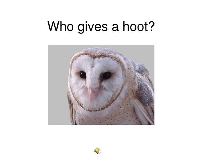 who gives a hoot n.