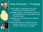 data analyses foraging