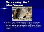 burrowing owl continued