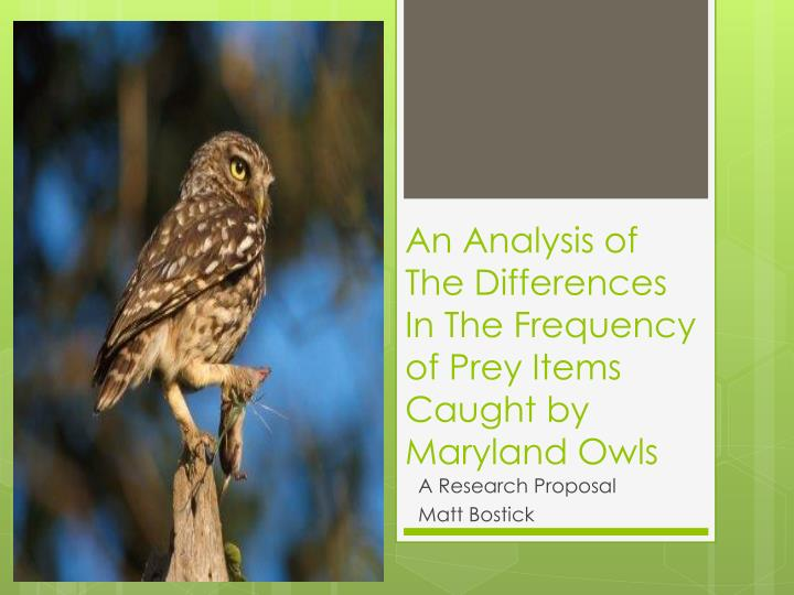 an analysis of the differences i n the frequency of prey items caught by maryland owls n.