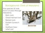 background owls of maryland