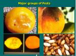 major groups of pests3