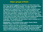 major groups of pests5