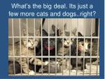 what s the big deal its just a few more cats and dogs right