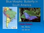 blue morpho butterfly in south america
