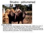 shudra p llumehed