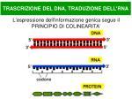l espressione dell informazione genica segue il principio di colinearita