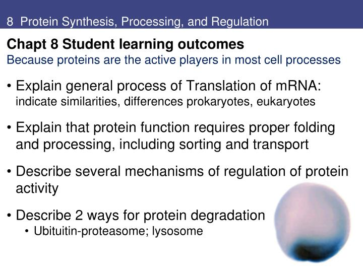 8 protein synthesis processing and regulation n.