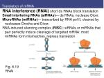translation of mrna7