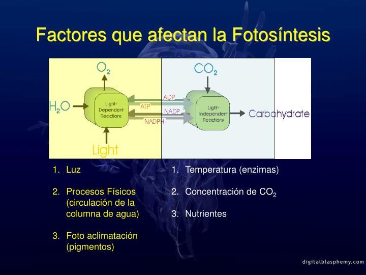 PPT - Curvas Fotosíntesis-Irradiancia (P-E) PowerPoint