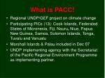 what is pacc