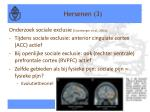 hersenen 3