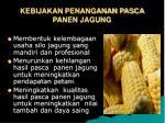 kebijakan penanganan pasca panen jagung