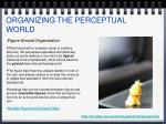 organizing the perceptual world1