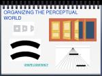 organizing the perceptual world23