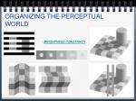 organizing the perceptual world25