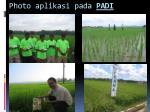 photo aplikasi pada padi