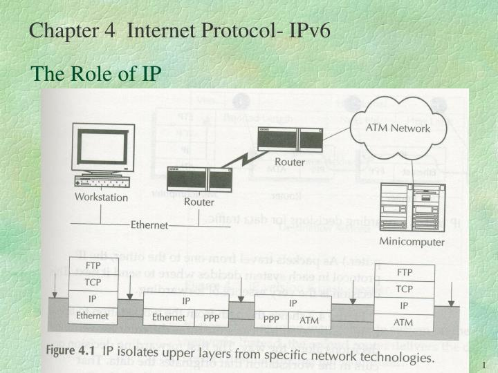 the role of ip n.