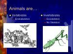 animals are