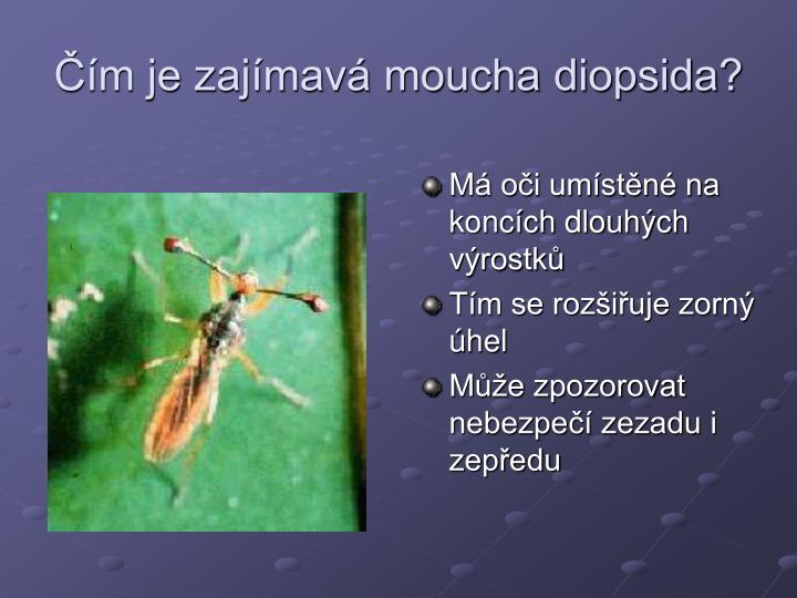 Čím je zajímavá moucha diopsida?