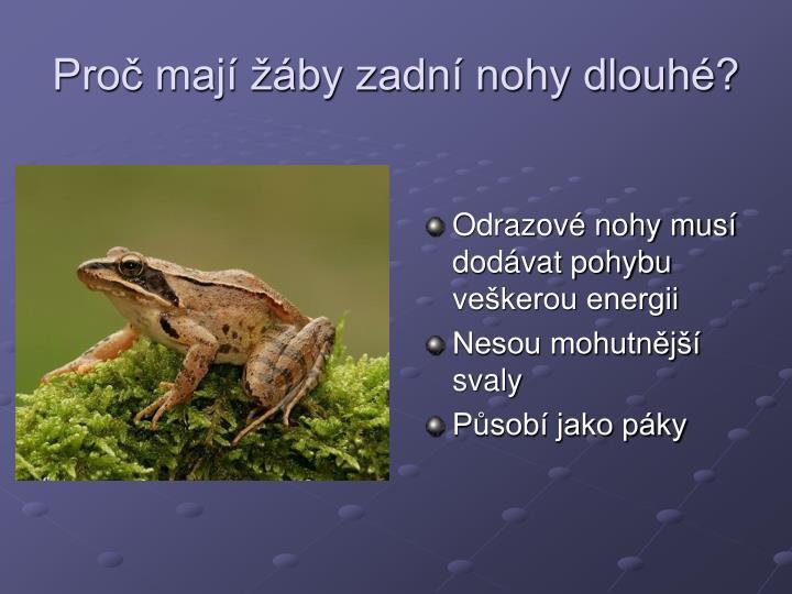 Proč mají žáby zadní nohy dlouhé?