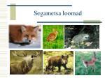 segametsa loomad