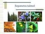 segametsa taimed