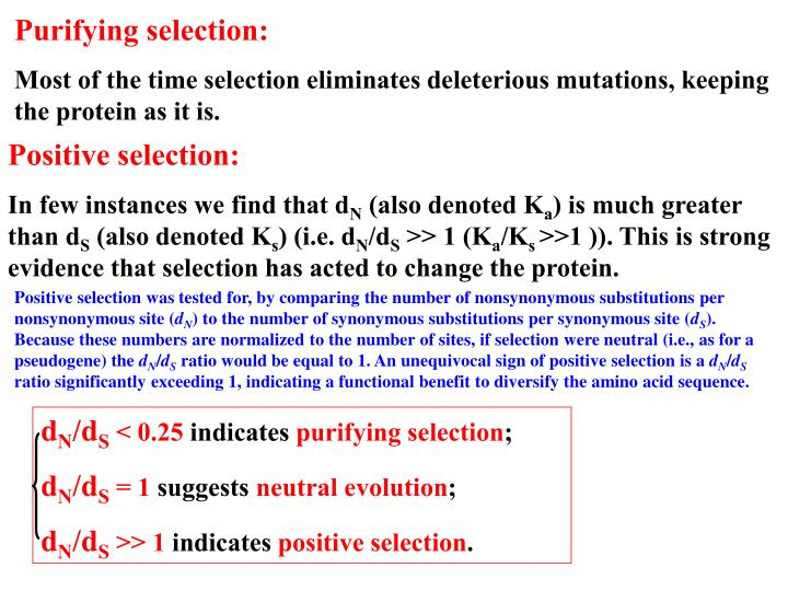 Purifying selection: