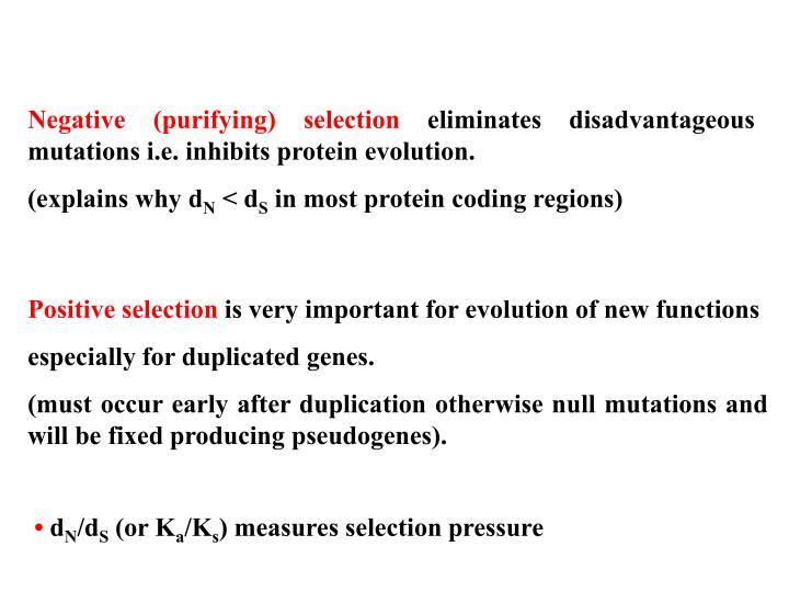 Negative (purifying) selection