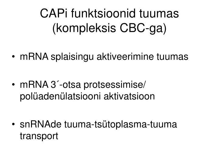 CAPi funktsioonid tuumas (kompleksis CBC-ga)