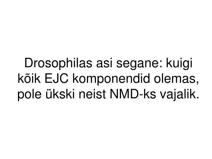 Drosophilas asi segane: kuigi kõik EJC komponendid olemas, pole ükski neist NMD-ks vajalik.