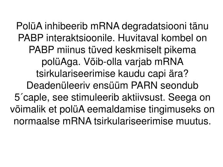 PolüA inhibeerib mRNA degradatsiooni tänu PABP interaktsioonile. Huvitaval kombel on PABP miinus tüved keskmiselt pikema polüAga. Võib-olla varjab mRNA tsirkulariseerimise kaudu capi ära?  Deadenüleeriv ensüüm PARN seondub 5´caple, see stimuleerib aktiivsust. Seega on võimalik et polüA eemaldamise tingimuseks on normaalse mRNA tsirkulariseerimise muutus.