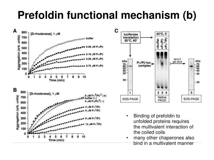 Prefoldin functional mechanism (b)