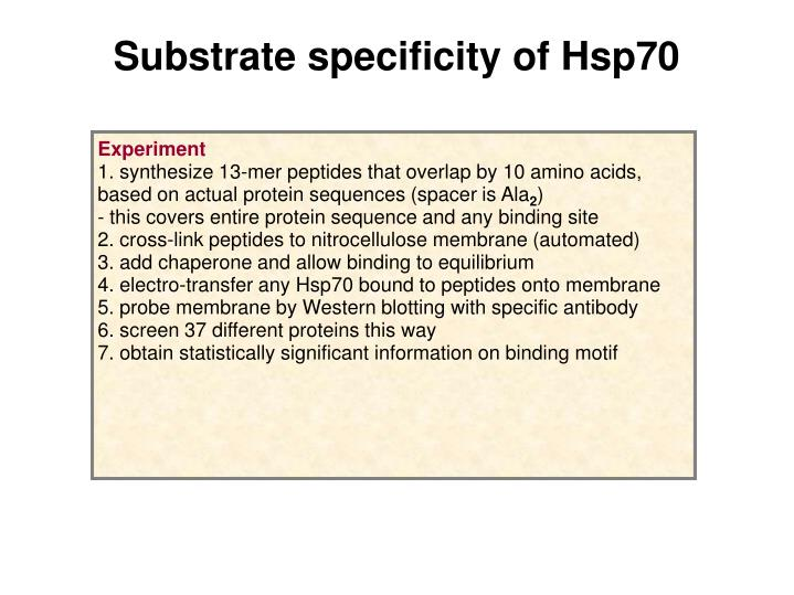 Substrate specificity of Hsp70