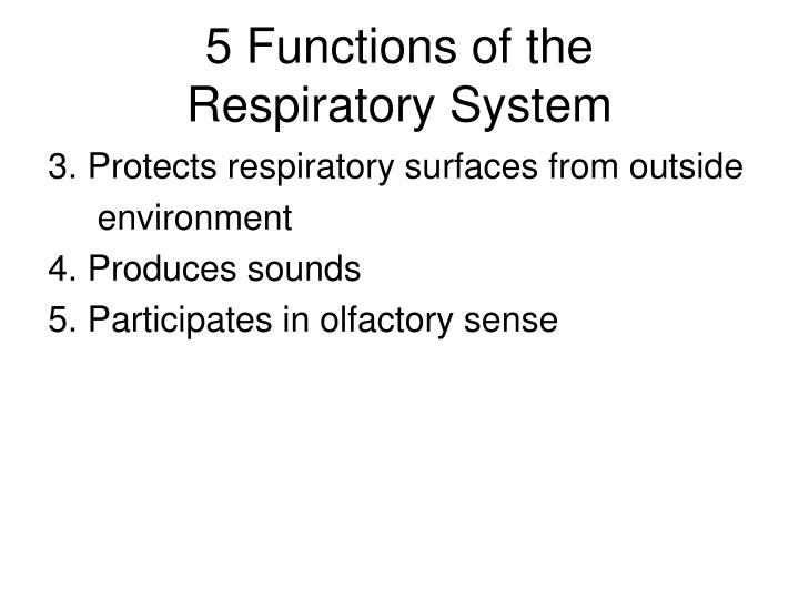 PPT - RESPIRATORY PHYSIOLOGY PowerPoint Presentation - ID:4563067