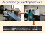 acrylamide gel electrophoresis 1