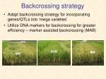 backcrossing strategy