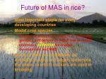 future of mas in rice