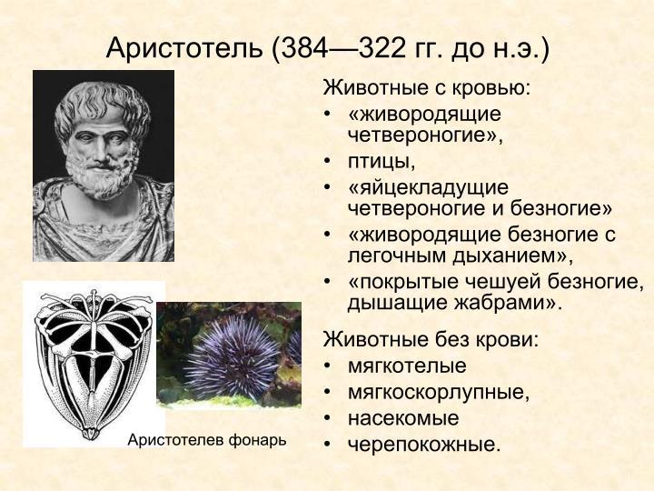 Аристотель (384—322 гг. до н.э.)